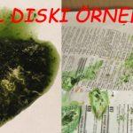 yesil_diskilar